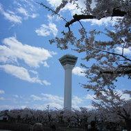 桜、キレイだったなぁ