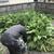 除草剤散布はじまってまーす!